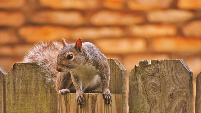 Squirrel, Fence, Photoshop, Photography, Beautiful