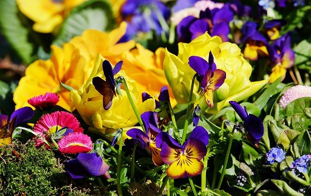 Flowers, Colorful, Beautiful, Sea Of Colour, Mood