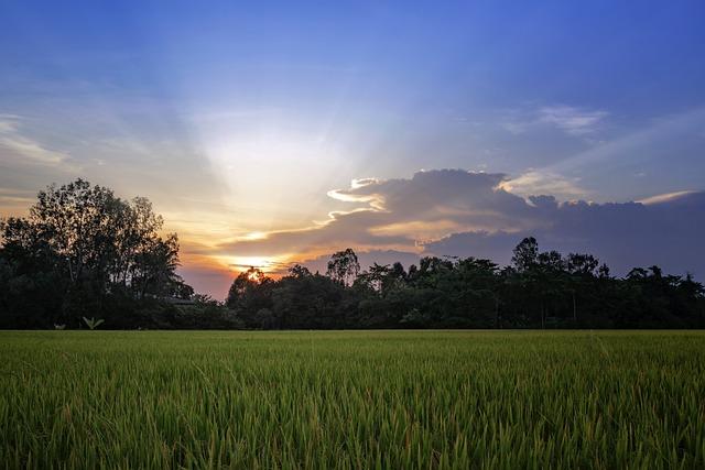 Vietnam, Landscape, Beautiful, Sky, Cloud, Tree