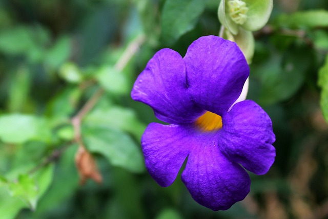 Flower, Flora, Beautiful, Violet, Wild, Wild Flower