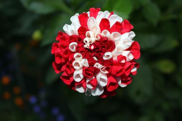 Dahlias, Georginie, Colorful Flowers, Beauty, Nature