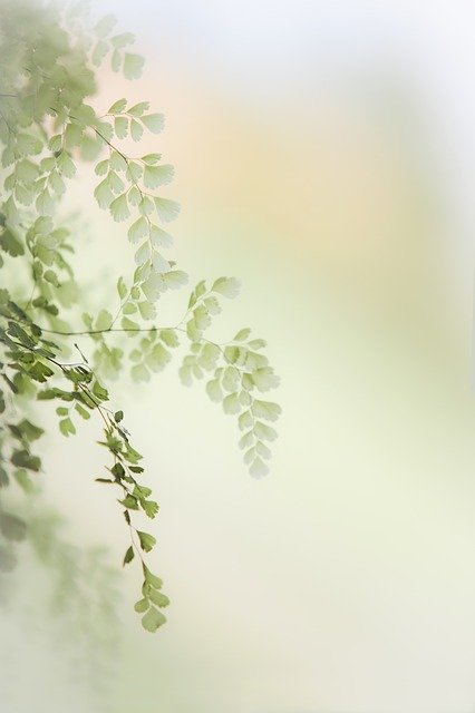Spring, Light, Nature, Garden, Flowers, Beauty, Plant