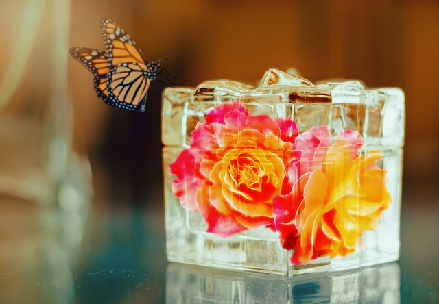 Roses In A Box, Flower, Abstract, Nature, Beauty