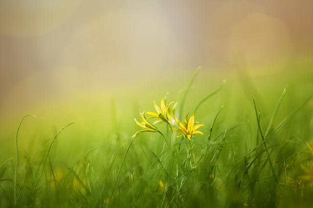 Grass, Field, Nature, Summer, Spring, Beauty, Yellow