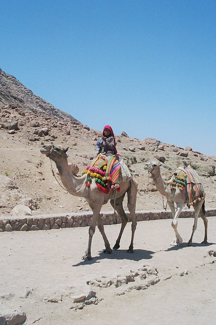 Bedouin, Boy, Dromedaries, Holiday, Travel, Middle East