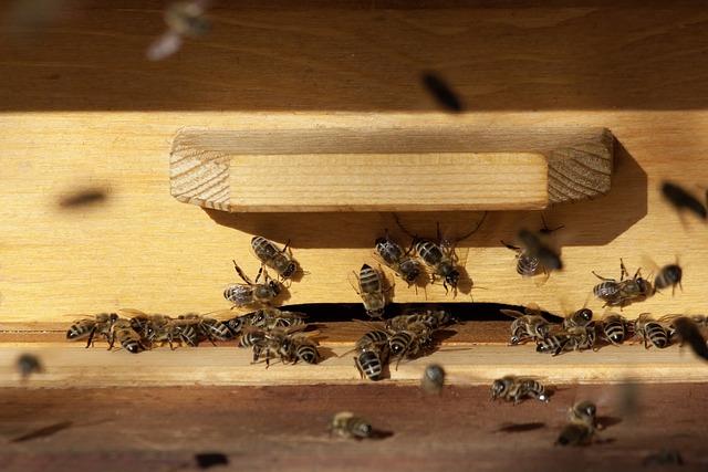 Bee, Beehive, Honey Bees, Insect, Arbeiterinportrait