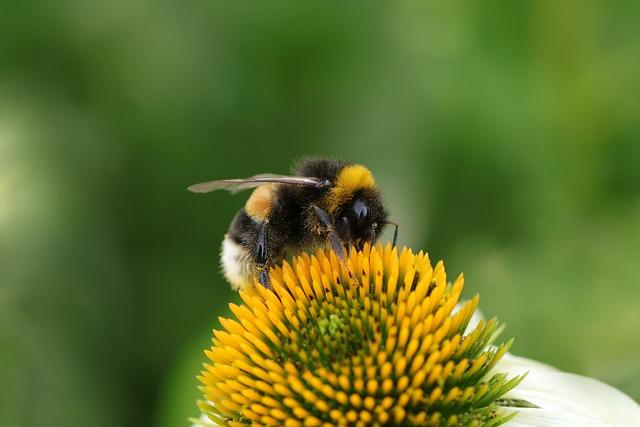Flower, Bumblebee, Pollination, Bee, Bug, Pollinate