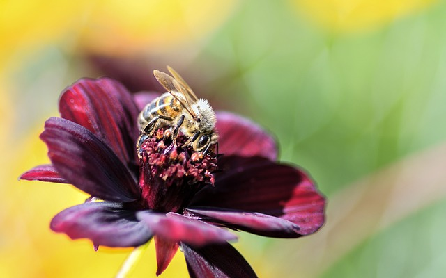 Bee, Flower, Insect, Forage, Macro