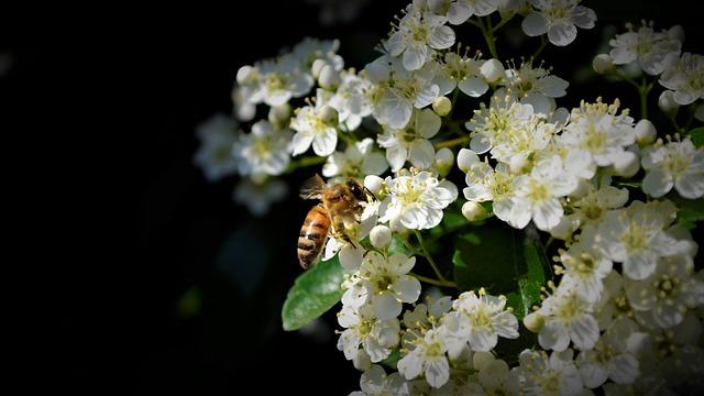 Bees, Nice, Bee, Nature, Flower, Honey, Close Up