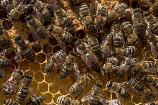 Beehive, Bee, Honeycomb, Beeswax, Honey, Delicious
