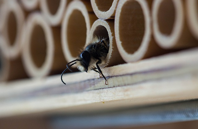 Insect, Close, Animal, Bee, Macro, Bee House