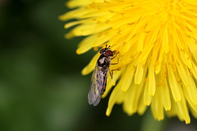 Nature, Insect, No Person, Outdoor, Bee, Flower, Fly