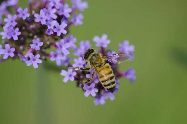 Macro, Insect, Bee