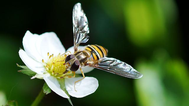 Insect, Nature, Bee, Pollination