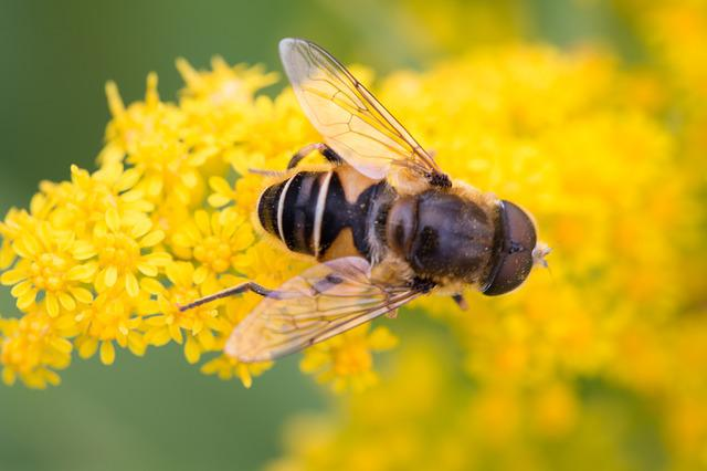 Bee, Yellow Flower, Insects, Macro