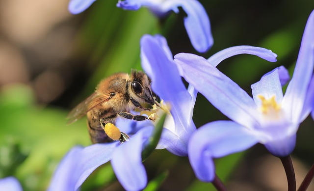 Nature, Bee, Close, Honey, Pollen, Macro, Insect