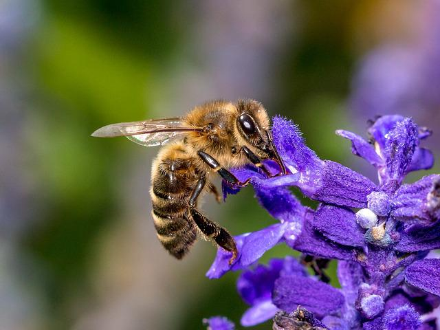 Bee, Flower, Insect, Blossom, Bloom, Macro, Nature