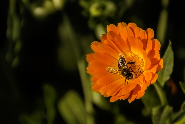 Bee, Flower, Spring, Macro, Nature, Pollen, Nectar
