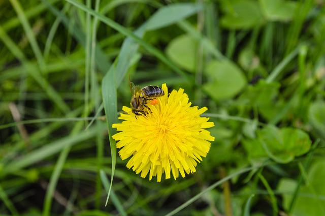 Bee, Macro, Flower, Insect, Yellow, Summer, Nature