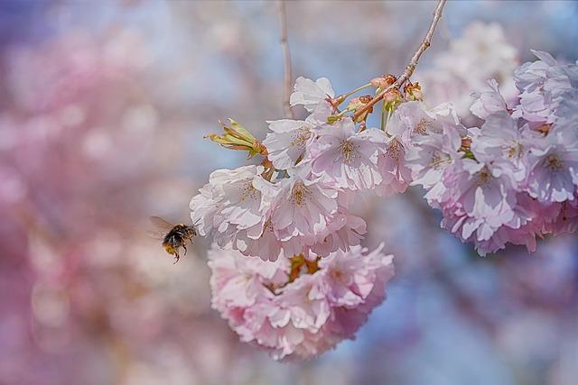 Bee, Blossom, Spring, Fruit Tree, Spring Awakening