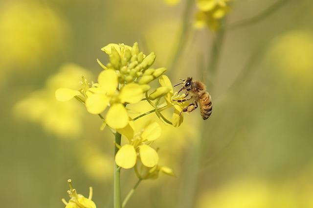 Flowers, Spring, Bee, Honey, Cosmos, Dandelion