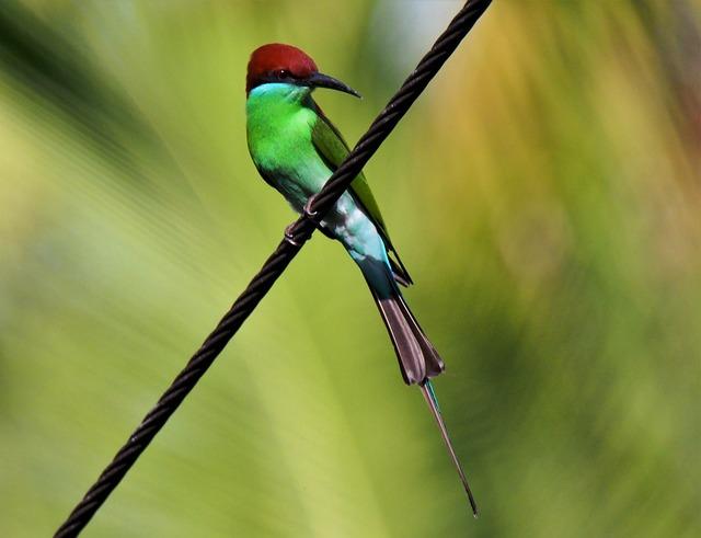Bird, Wildlife, Animal, Bee, Nature, Wild, Outdoors