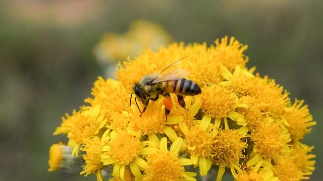 Fertilization, Bee, Flower, Yellow, Spring, Nature