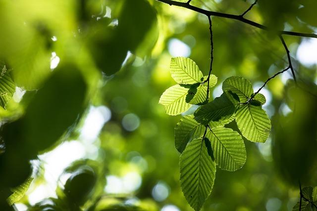Beech, Beech Leaves, Branch, Book Industry, Tree