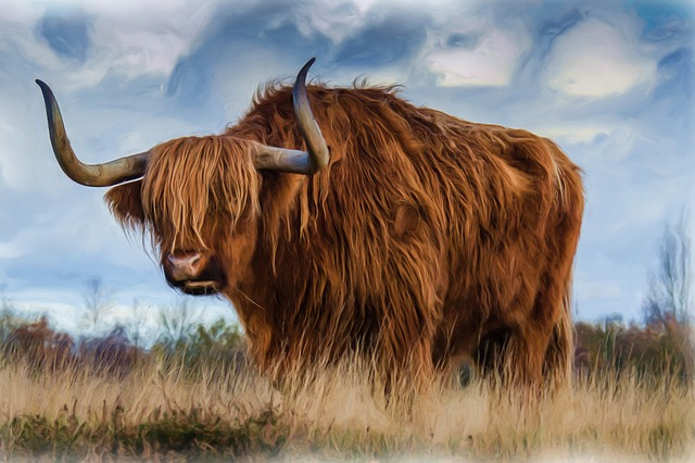 Painting, Oil Painting, Photo Painting, Bull, Beef
