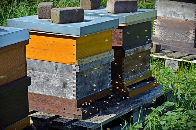 Bees, Beehive, Honey Bees, On Approach, Honey