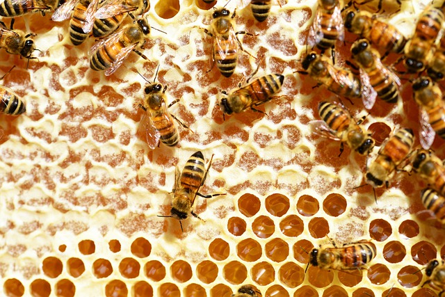 Bees, Honey, Honey Bees, Honeycomb, Combs, Beehive