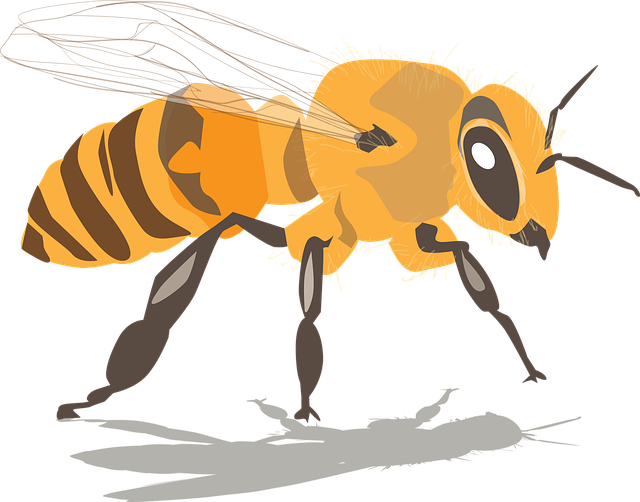 Bee, Insect, Honey, Beeswax, Beekeeping, Beehive