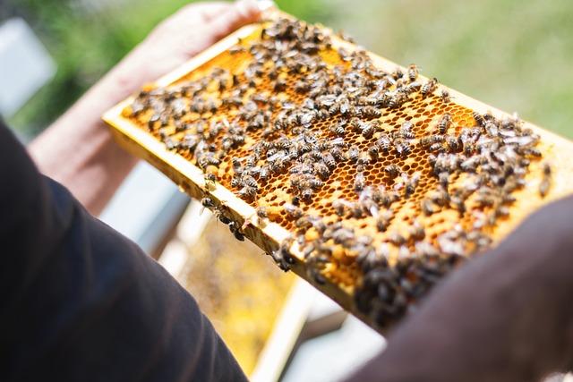 Bees, Combs, Beekeeper, Honeycomb, Beekeeping