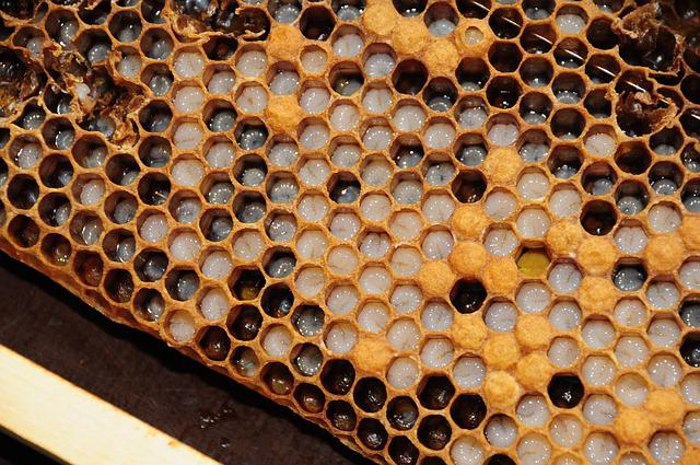 Honeycomb, Simmer, Bees, Honey, Nectar