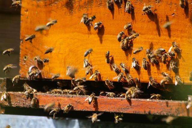 Bees, Foragers, Hive, Essain, Pollinator, Honey