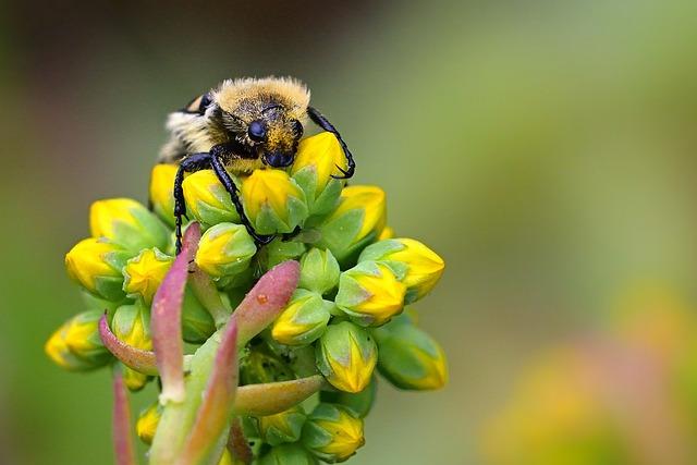 Beetle, Banded Brush Beetle, Blossom, Bloom, Close Up