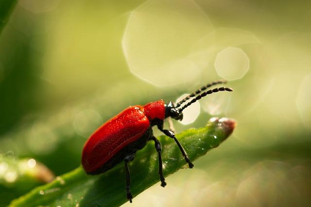 Poskrzypka Purple, The Beetle, Macro, Beetle, Closeup