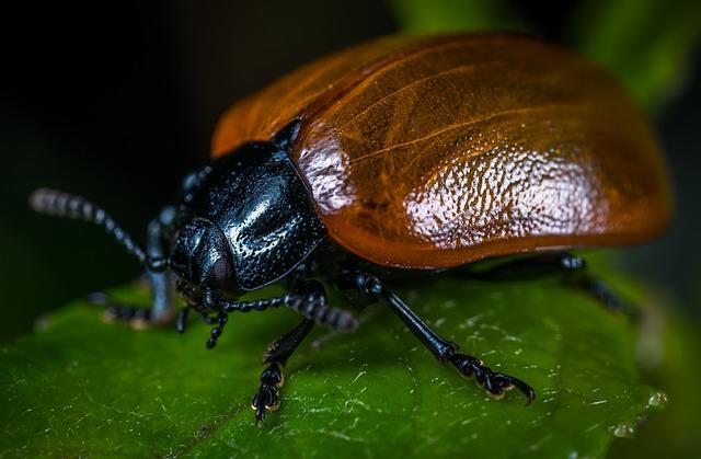 Bespozvonochnoe, Insect, Beetle, No One, Living Nature