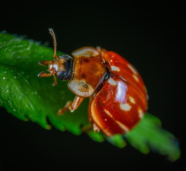 Macro, Insect, Beetle