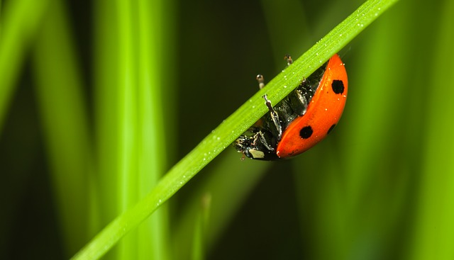 Insect, Sheet, No One, Nature, Plant, Beetle, Ladybug