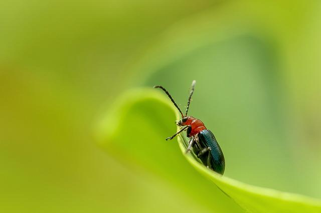 Insect, Nature, Beetle, Ladybug, Little, Animal