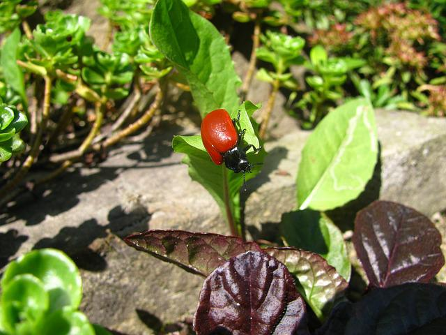 Beetle, Insect, Leaf, Foliage, Insects, The Red Beetle