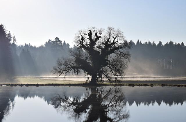 Lake, Waters, Tree, Landscape, Dawn, Spring, Beginning