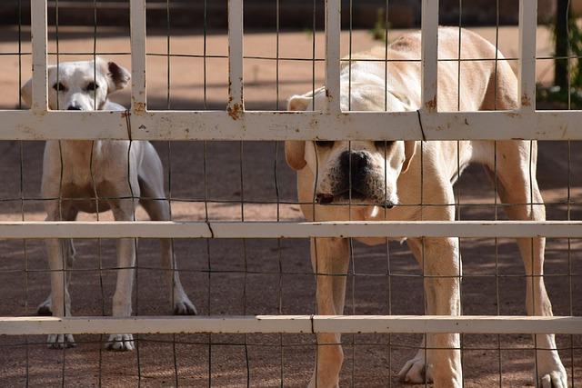 Dog, Guard Dog, Behind Barriers, Dog Behind Bars, Goal