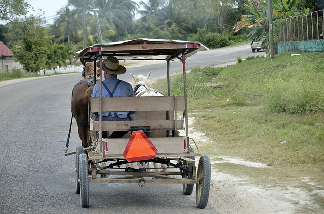 Central America, Belize, Horse Drawn Carriage, Carry