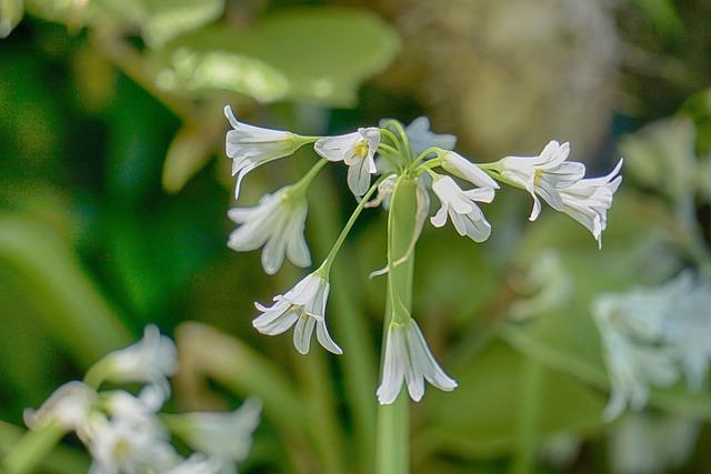 Flowers, Bells, Summer, Sweetness, Plant, White Flower