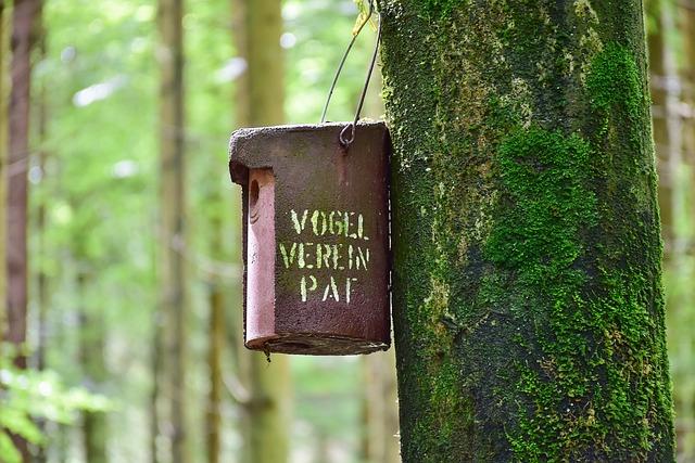 Nesting Box, Forest, Tree, Bemoost, Moss, Breed, Bird