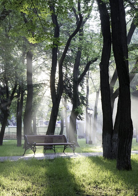 Park, Bench, Tree, Sunrise, Sunlight, For Relax, Trees