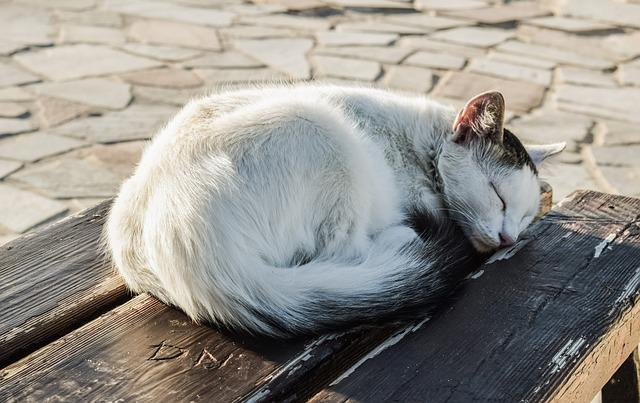 Cat, Young, Sleeping, Cute, Adorable, Animal, Bench