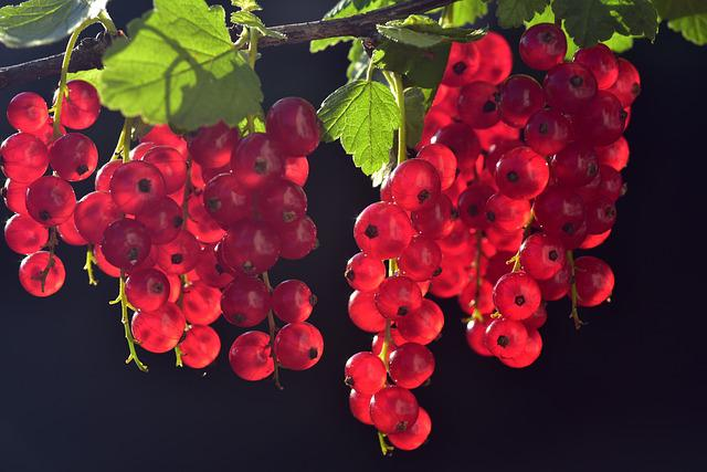 Currants, Red, Fruit, Fruits, Close Up, Garden, Berries